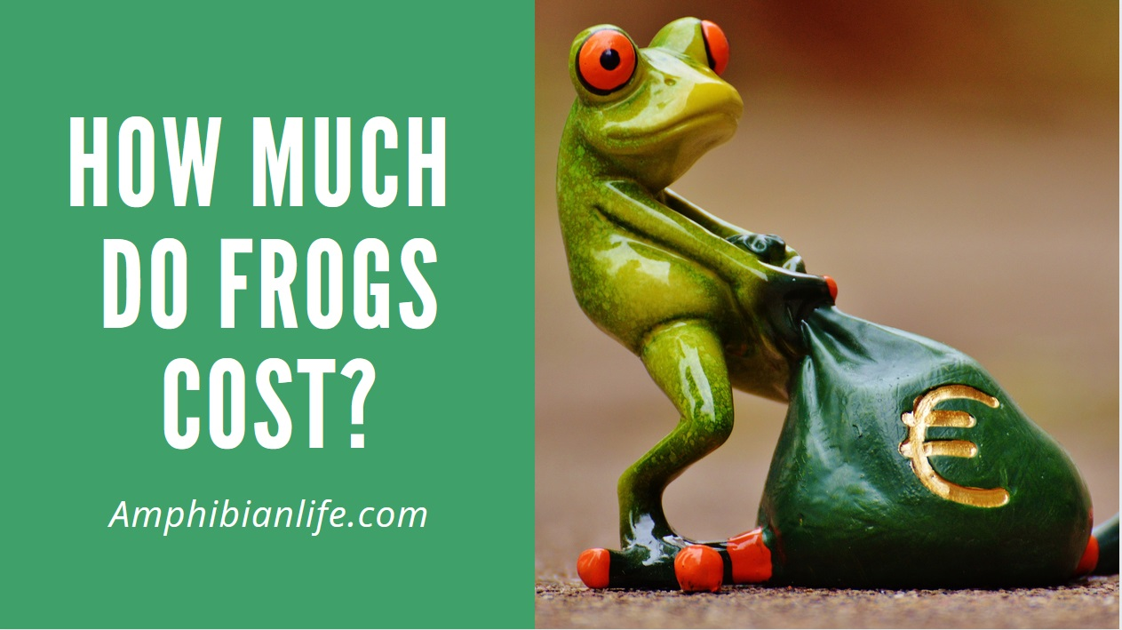 How much does a pet frog cost