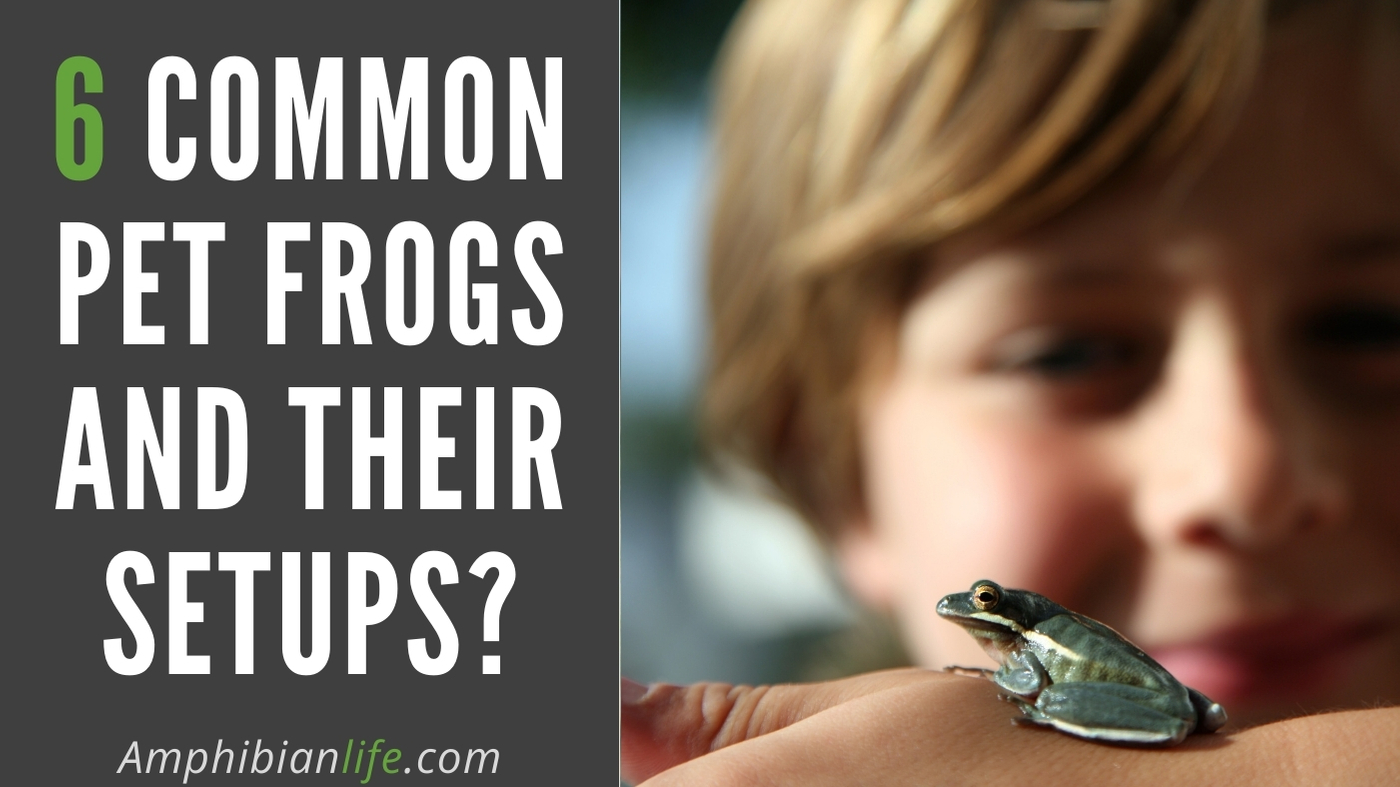 Most Popular Pet Frogs For Beginners
