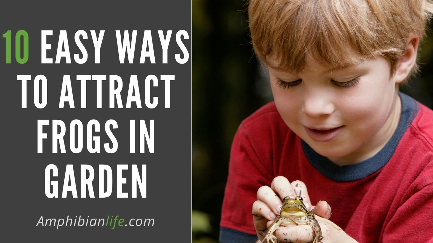 How to lure amphibians in your garden?