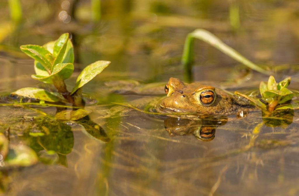 How to Attract Amphibians to Your Garden