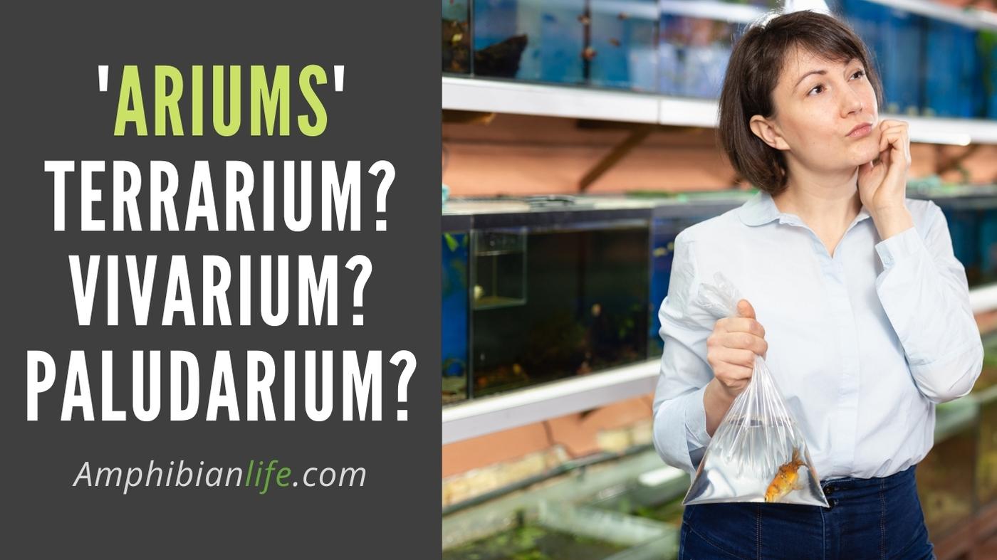 Difference between vivarium terrarium paludarium