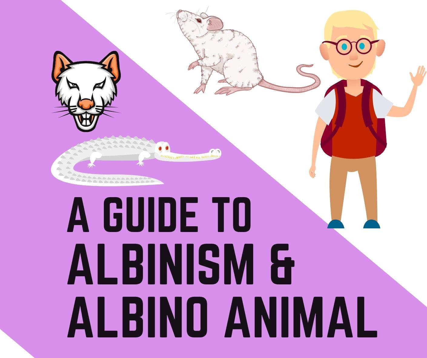 albinism and albino amphibians