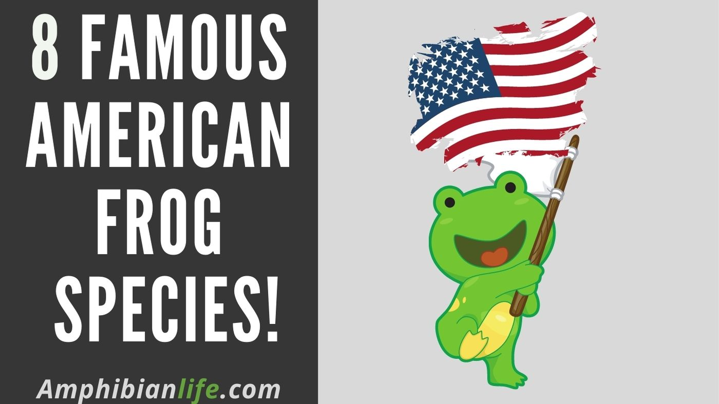 Best Frogs of America and canada