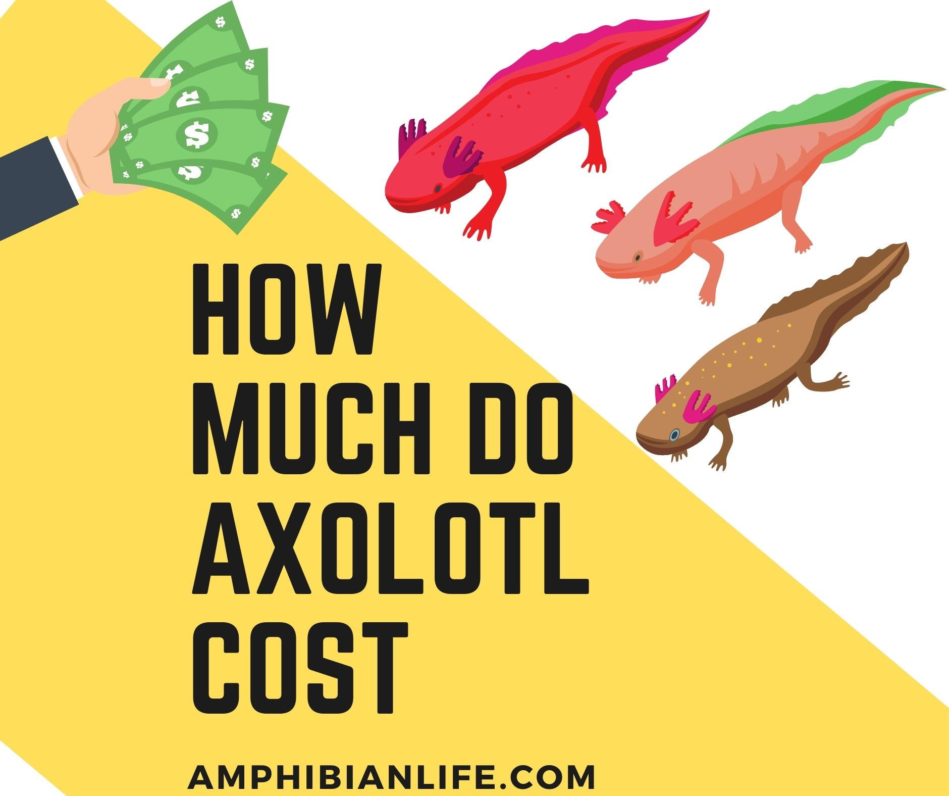 How much do Axolotl cost?+Tank and Accessories