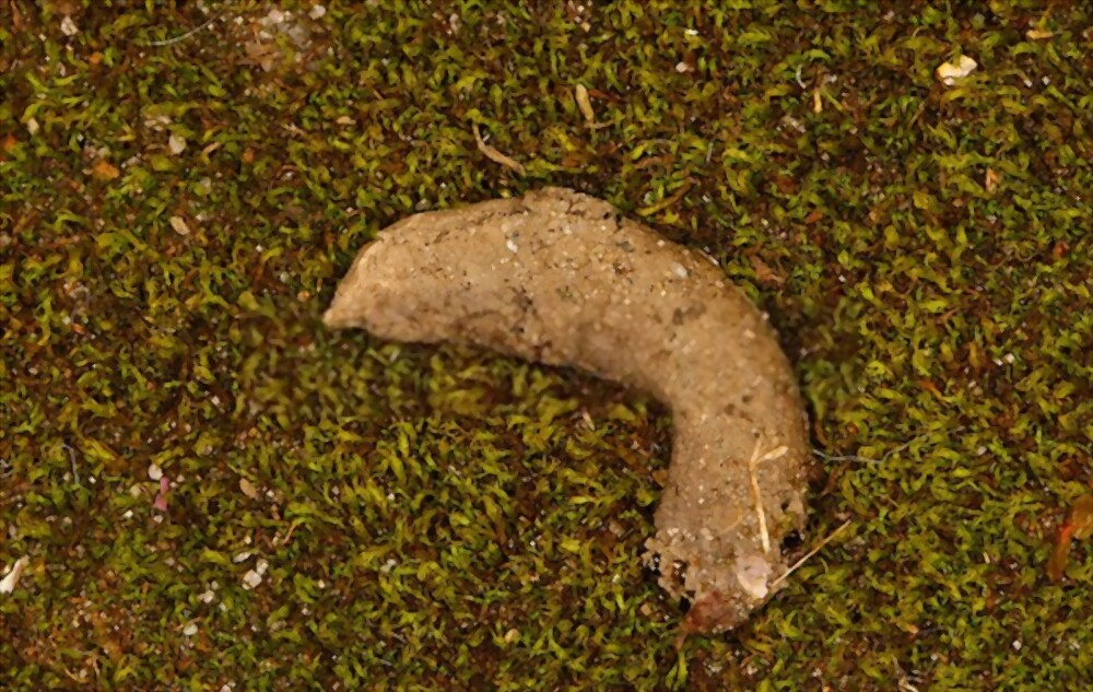 the basic texture of frog or toad poop