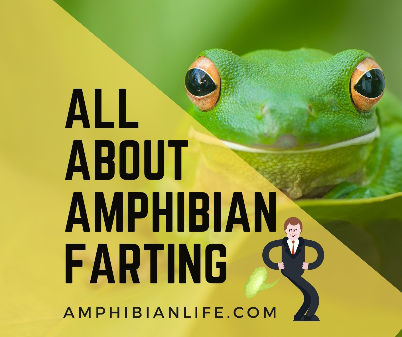 Do all frogs fart