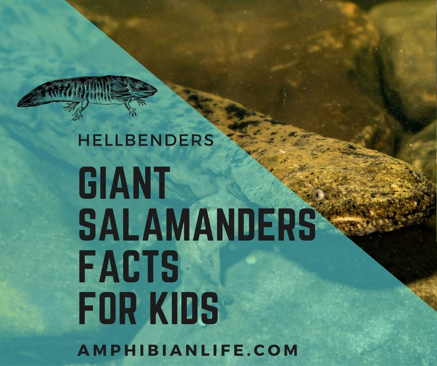giant salamander facts for kids
