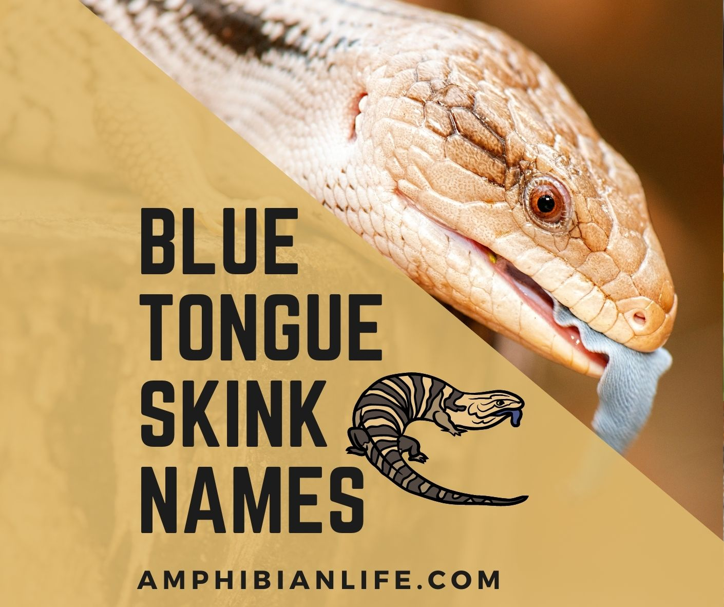 Cute and Funny blue tongue skink names