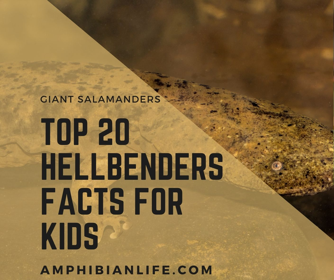 hellbenders facts for kids